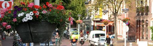 Plantenbak en een overzicht van de straat